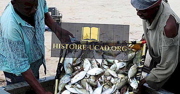Especies de peces nativos de Kenia