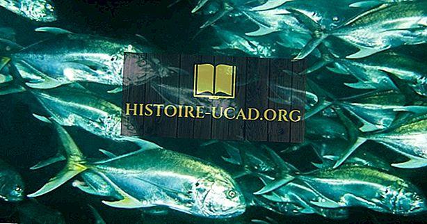 Родната риба на Коста Рика
