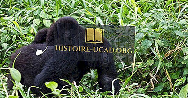 Parcs Nationaux De La République Démocratique Du Congo