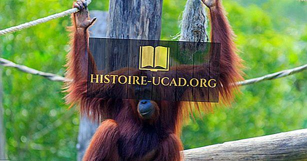 Kriticky ohrožených primátů Asie