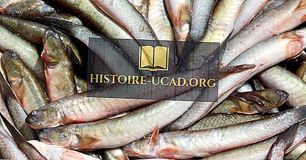 Родната риба на Тайланд