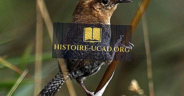 طيور كولومبيا الأصلية