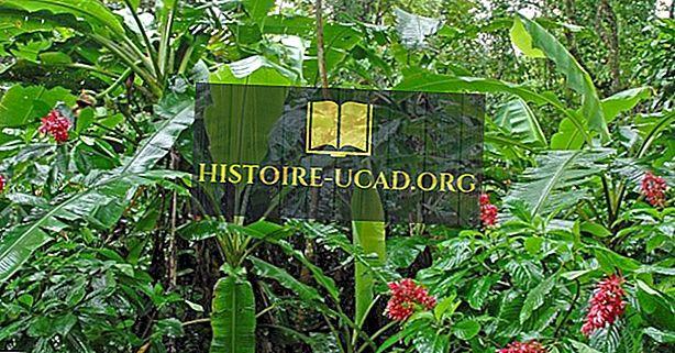 Costa Rican uhanalaiset endeemiset kasvit