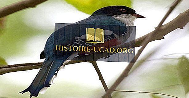 Haiwan Dan Burung Cuba