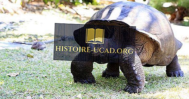 Atol Aldabra, Seszele