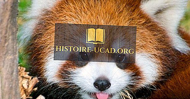 Κόκκινα γεγονότα Panda: Ζώα της Ασίας