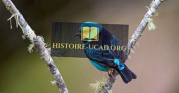 Gimtoji Kosta Rikos paukščiai