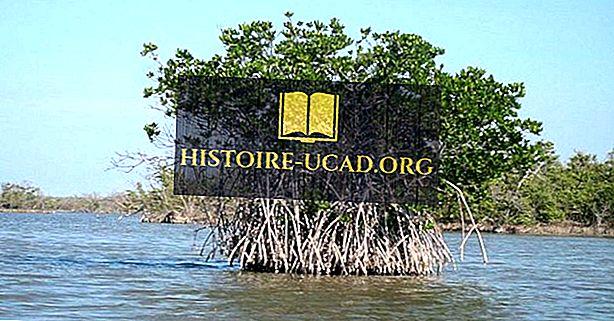 Ekološke regije Gabona