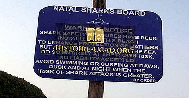 Cápa támadások Dél-Afrikában