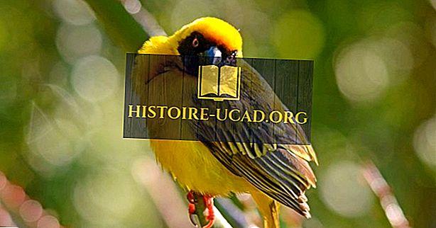 Loài chim đặc hữu của Kenya