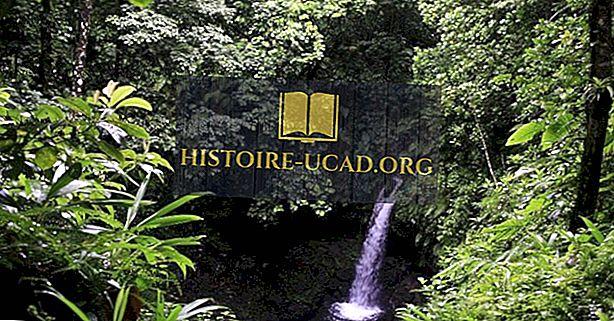 مورن تروا بيتونز الحديقة الوطنية ، دومينيكا