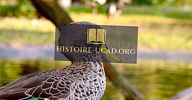 Zagrożone endemiczne ptaki Madagaskaru