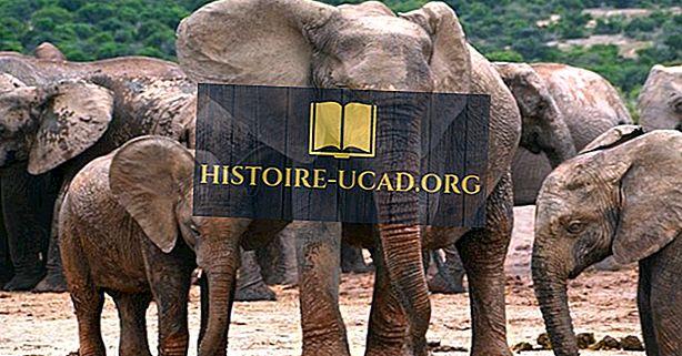 Сколько видов слонов там?