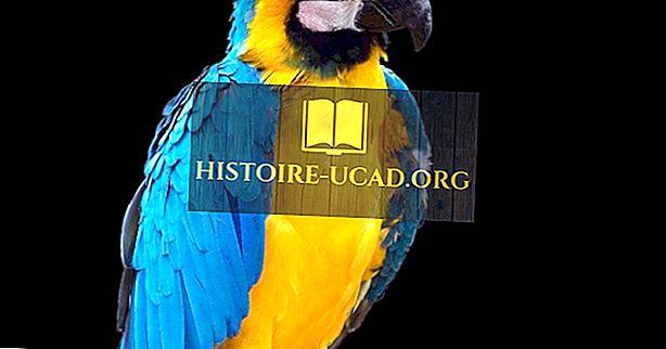 Ендемични видове птици на Боливия