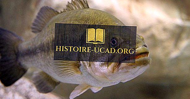 Природне врсте риба Канаде