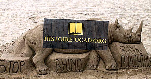 Tipos de rinocerontes que viven alrededor del mundo hoy