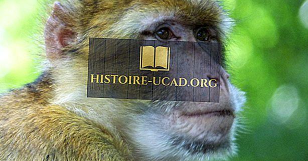 Alžir Životinje: Ugroženi sisavci Alžira