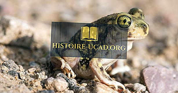 okolje - Spadefoot Toad Facts: Živali Severne Amerike