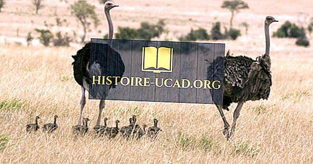 Родные птицы Судана