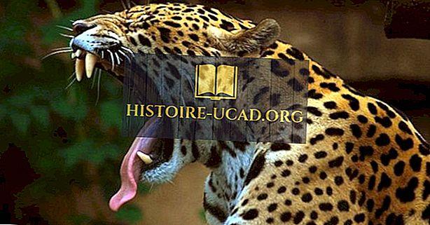 Πού ζουν οι Jaguars;