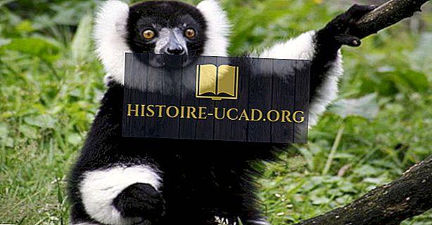 أكثر الثدييات المهددة بالانقراض في مدغشقر