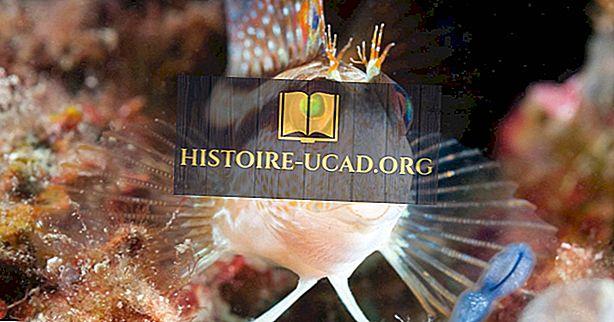 Espèces de poissons indigènes d'Algérie