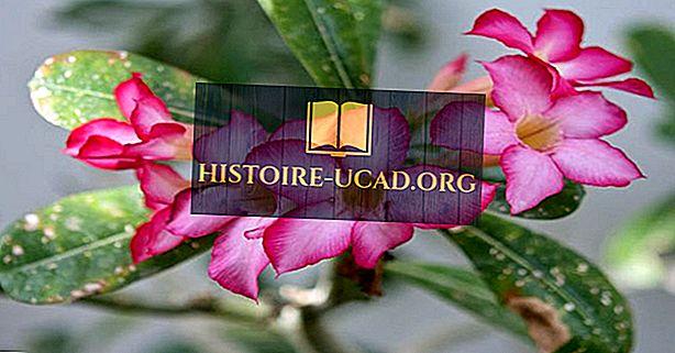 Rodzime gatunki roślin Czadu