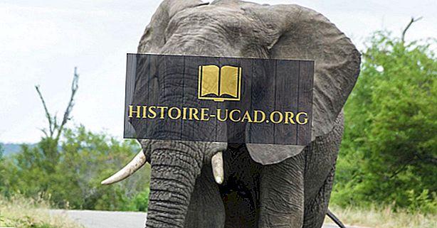 Afrikos dramblių faktai: Afrikos gyvūnai