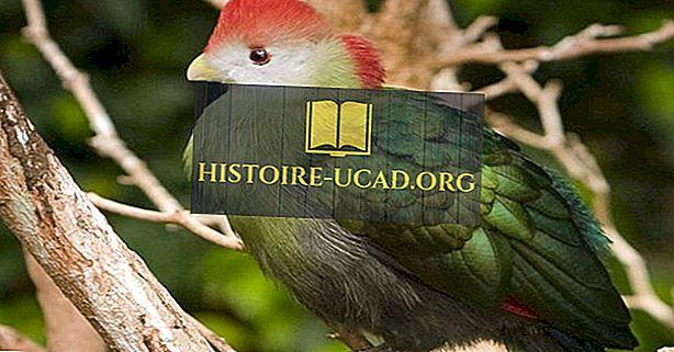 Endemische Vögel von Angola