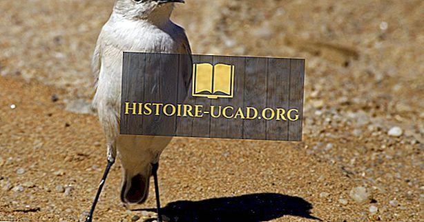 الطيور الأصلية في ناميبيا