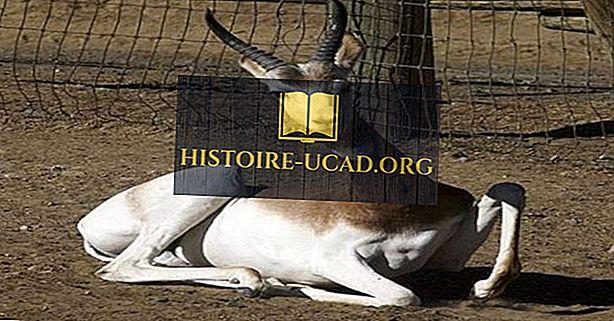 Bedreigde Zoogdieren van Niger