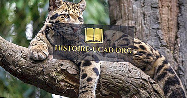 среда - Облачные факты о леопардах: животные Азии