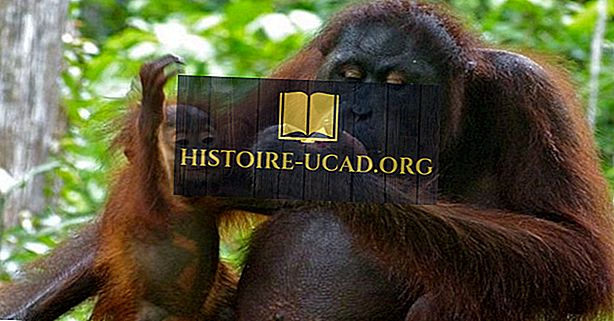 Orangutani svijeta: vrste, prijetnje i očuvanje