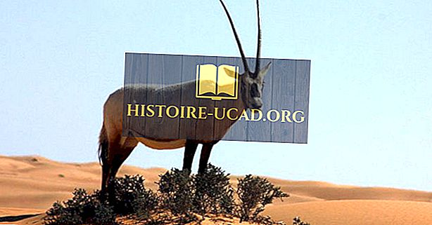 Leben in der arabischen Wüste: Welche Tiere leben hier?