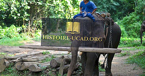 Faits sur l'éléphant d'Asie: Animaux d'Asie