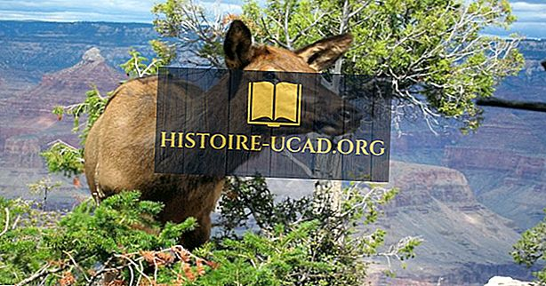 Које животиње живе у Гранд Цаниону?