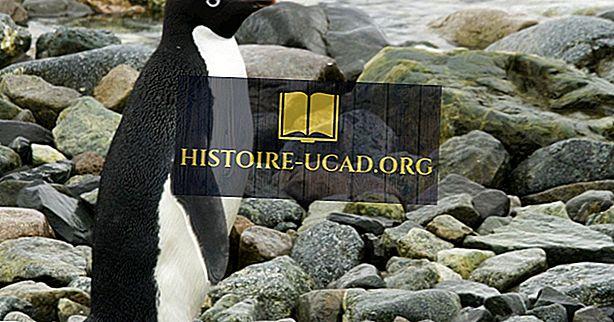 среда - Факты Пингвина Адели: Животные Антарктиды