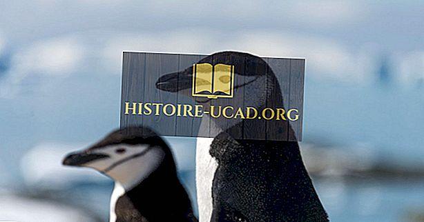 Koliko vrst pingvinov obstaja?
