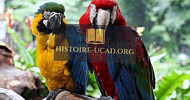 สดใสและสวยงาม: ประเภทของ Macaws ที่อาศัยอยู่ในโลกทุกวันนี้