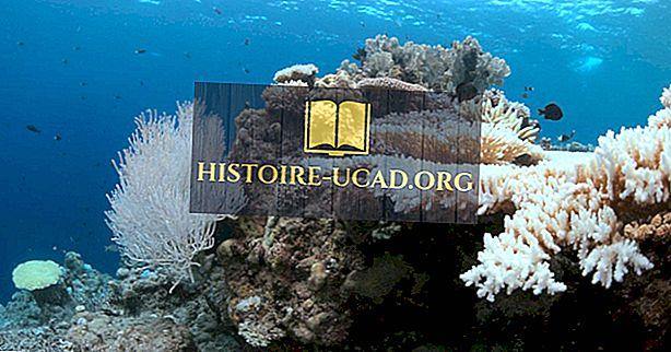 Mennyire súlyos a korallfehérítés problémája?