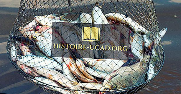 Kaj je vpliv ribiške industrije na okolje?
