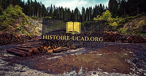 الآثار المدمرة لإزالة الغابات