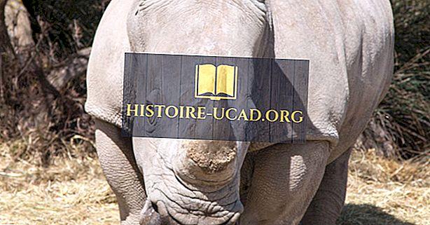 среда - Факты о белом носороге: животные Африки