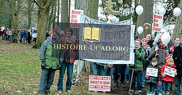 Kas notika kampaņas laikā, kad notika kampaņa mūsu mežā?