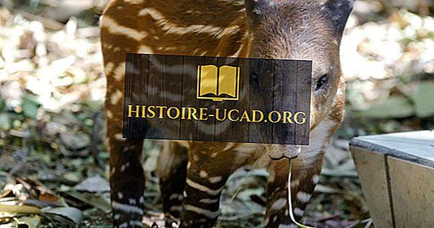 Faits Tapir: Animaux du monde