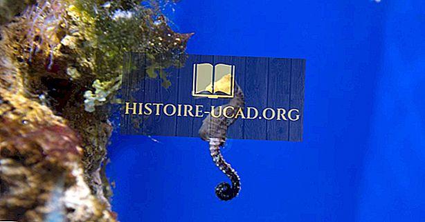 Fakta Hippocampus - Hewan Laut