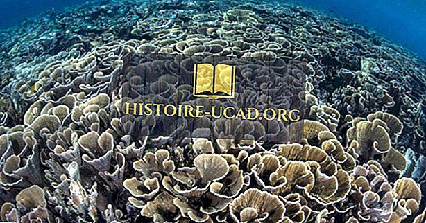 Загрози екосистемі коралового трикутника