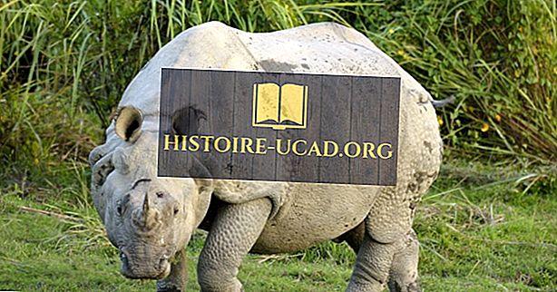 среда - Факты об индийском носороге: животные Азии