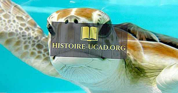 Sedem vrst morskih želv, ki živijo v oceanih našega planeta