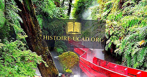 Biologinės įvairovės Hotspot Valdivijos vidutinio lietaus miško